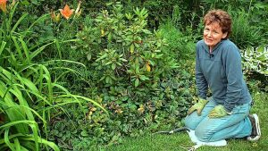 weeding the garden safety tips melioguide physiotherapy