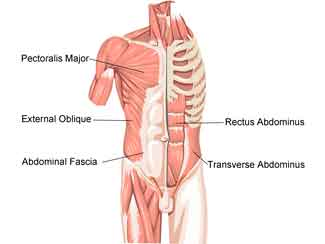 Transverse Abdominis Exercise and Lumbar Spine Support