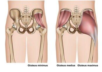 gluteus minimus maximus medius • melioguide physical therapy