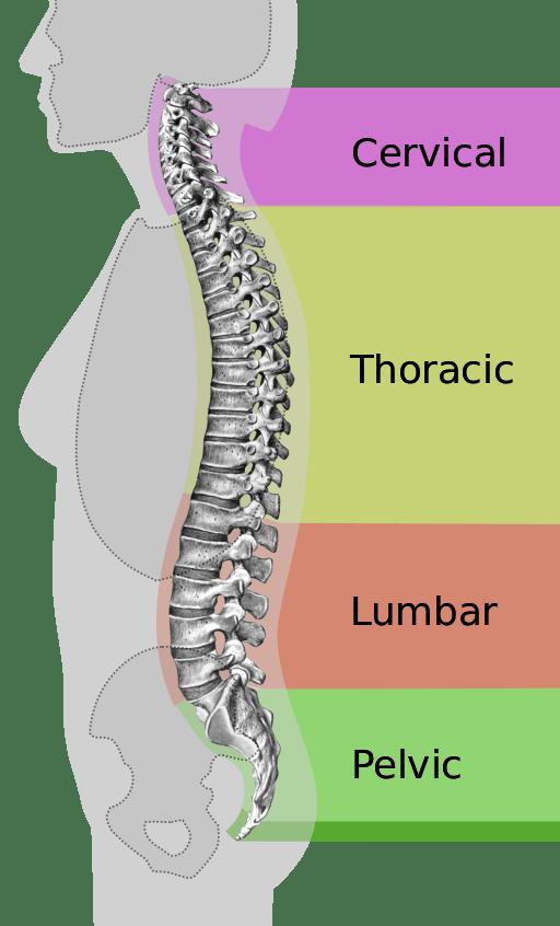 osteoporosis posture vertebral body