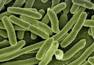 probiotics and bone loss bacteria